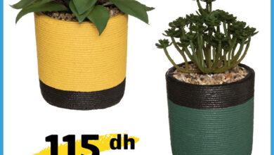 Soldes chez Alpha55 Plante ARTY CIMENT 18 cm 115Dhs au lieu de 135Dhs